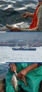 Photos: Rodger Bosch, MediaCulbSouthAfrica.com